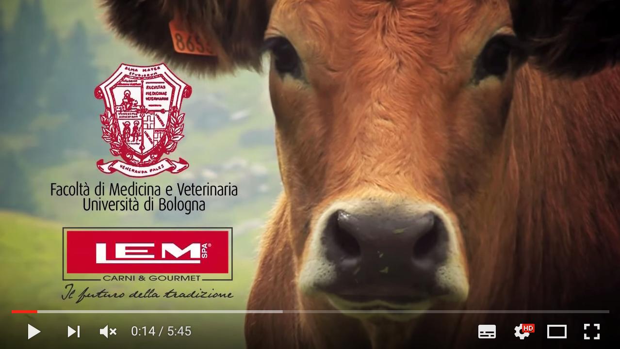 Video aziendale sulla produzione di carne tipo Wagyu Kobe